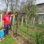 U bašči Elvira Hamzića iz Miljanovaca uspijevaju smokve, kivi, narandže, klementine, limun, kumkat, stenija, maslina, aronija, paubanana,  avokado…