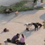 O psima lutalicama: Dozvoljeno je ubiti životinju koja predstavlja stvarnu opasnost po život i zdravlje čovjeka