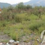 Poziv građanima da moraju uništavati ambroziju na svojim imanjima