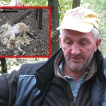Ramizu Tubiću čopor pasa napao stado ovaca