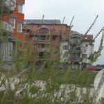 Općina Kalesija: Poziv građanima da preduzmu mjere uklanjanja i uništavanja ambrozije